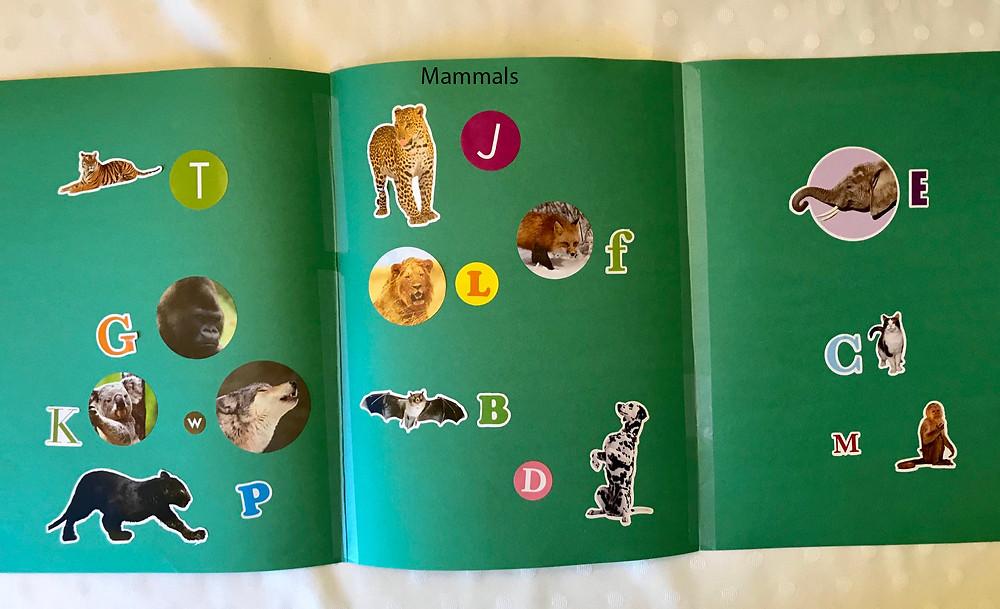 Mammal activity