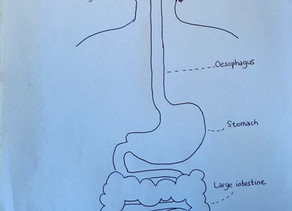 Our digestive system