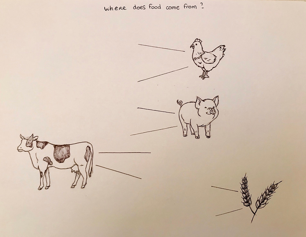 Where does food come from?