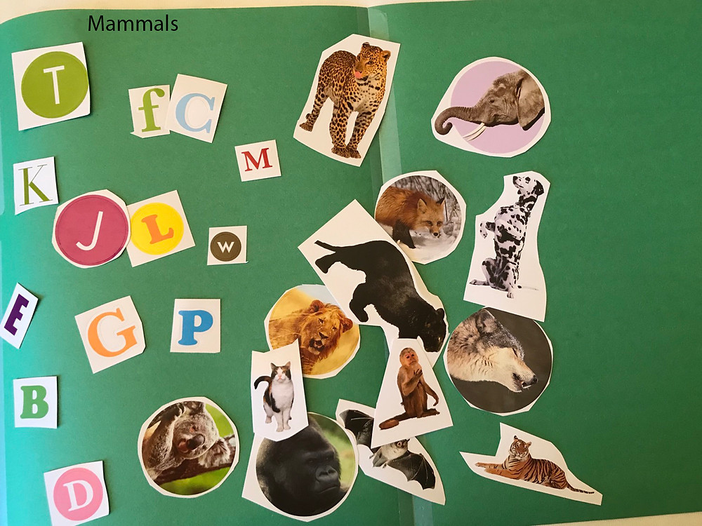 Mammals activity prep and required material