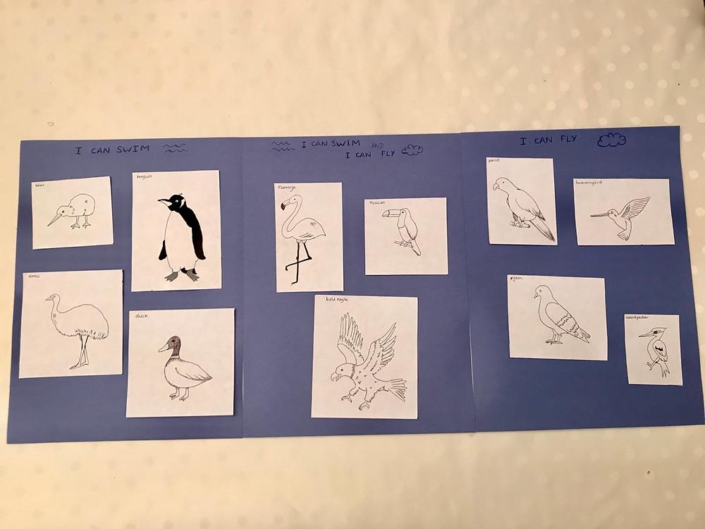 Classify birds activity