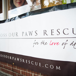 Rescue Feature:  CROSS OUR PAWS RESCUE