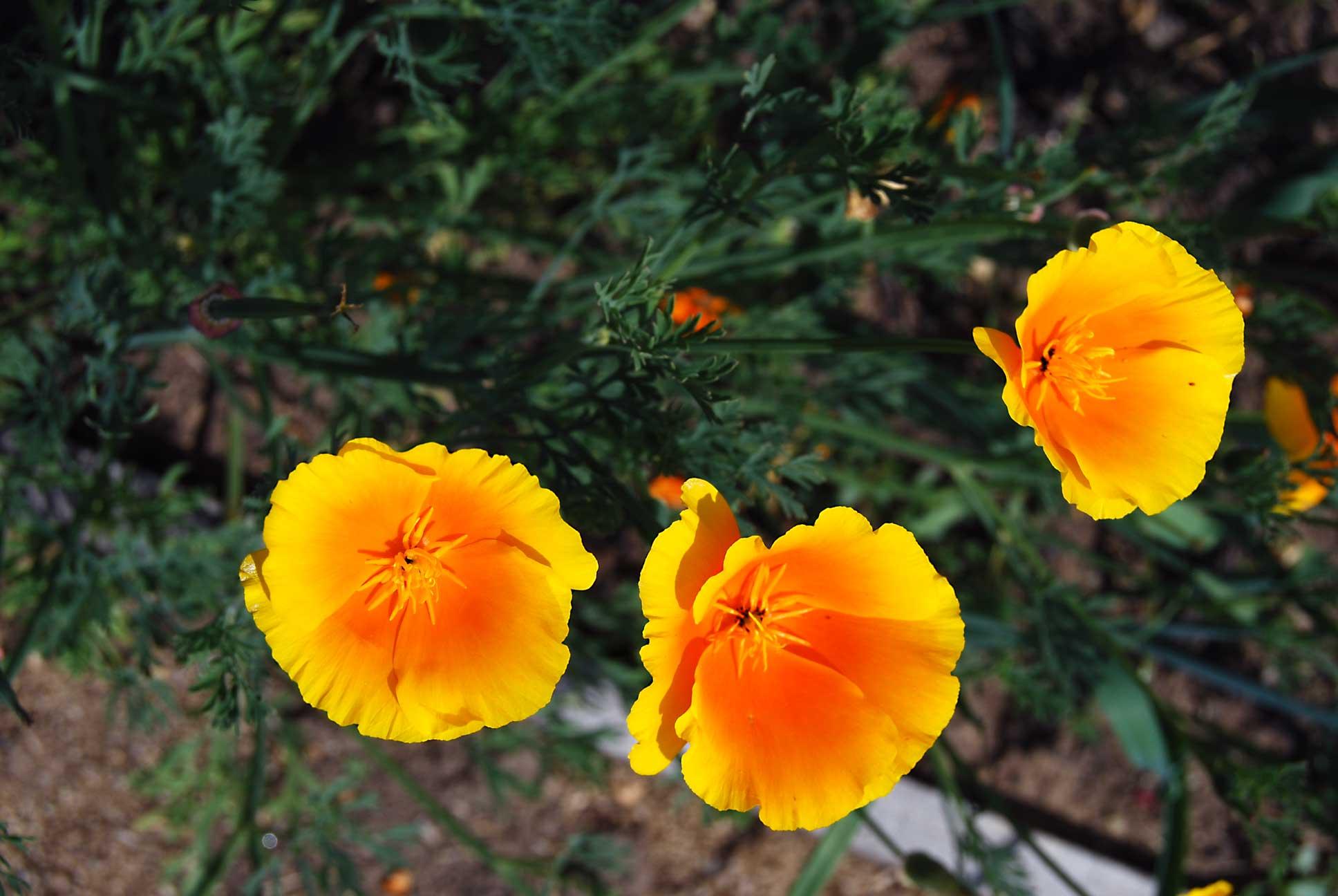 fleur-2-web