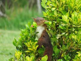 écureuil en balade à La Synchronicité