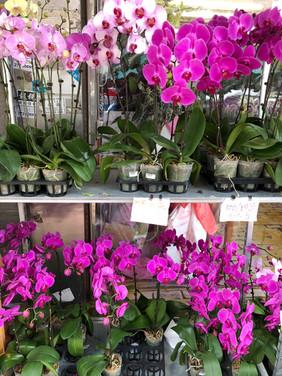 Flower Market HK