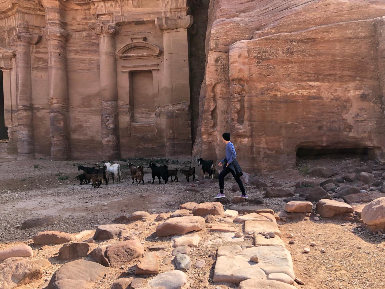 Goats at Petra