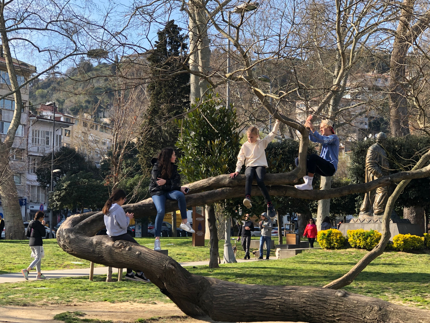 Trees in Bebek