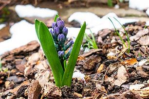 spring-4991348_1920.jpg