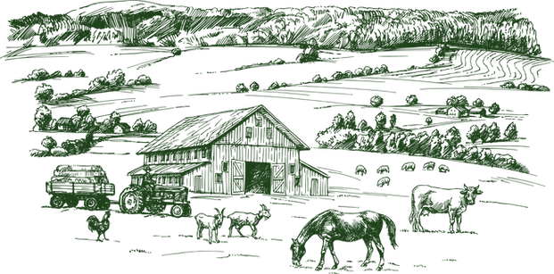 Bauernhofzeichnung_grün_png.png
