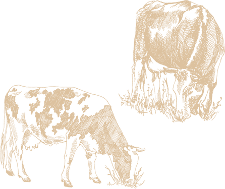 kühe.png