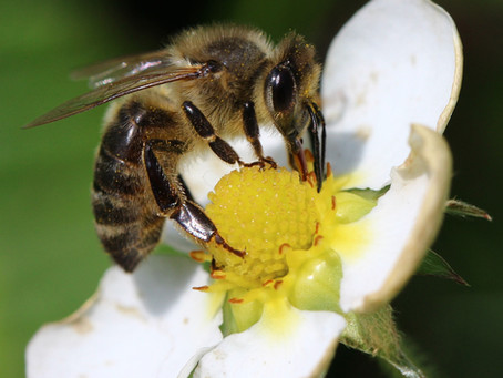 9 Tipps zum Schutz der Bienen!