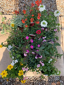 Basket Plants.jpg