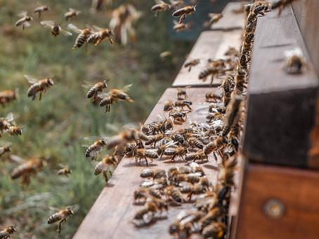 QueenBee - zu Besuch bei der Honigmanufaktur mit Herz