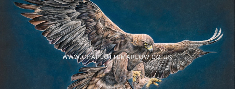 'Eyes to the Skies' Limited Edition Print