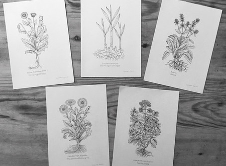 Medicinal Herb Illustrations | Falkland Palace, Fife
