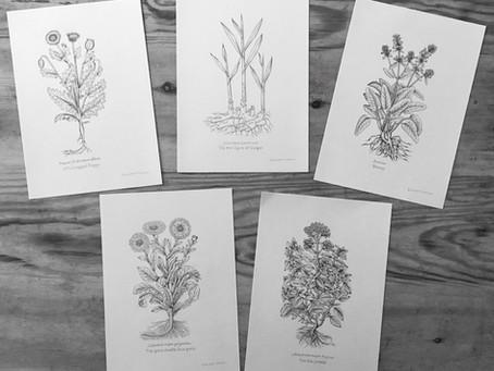 Medicinal Herb Illustrations | Falkland Palace, Fife