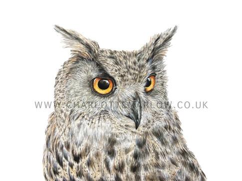 Guinevere - Eurasian Eagle Owl