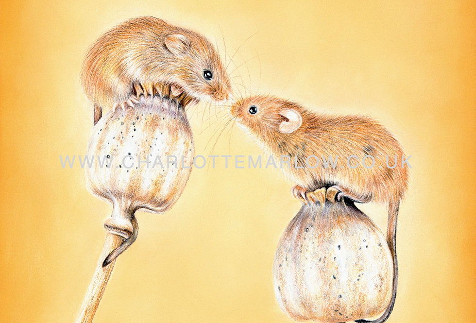 'Love at First Sniff' Limited Edition Print