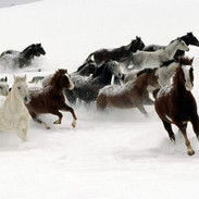 high-definition-horse-photography-1.jpg