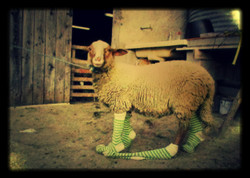 couette mouton chaussettes_edited_edited