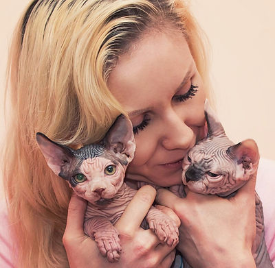About Glamour cattery comany
