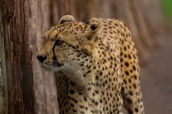 safari9
