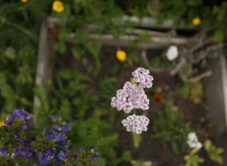 Gentle Medicine + Powerful Plants: Essential Oil Awareness