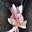 Thumbnail: Pink palms and pampas