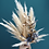 Thumbnail: Blue grey dried florals pampas spray