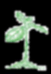Planta%20_edited.png