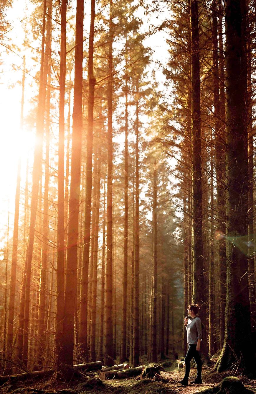 Wandering through the Trees.jpg