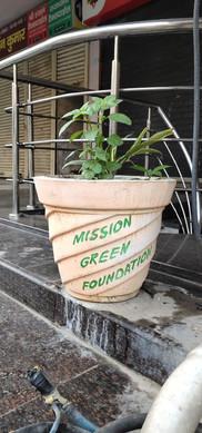 mission green pots4.jpg