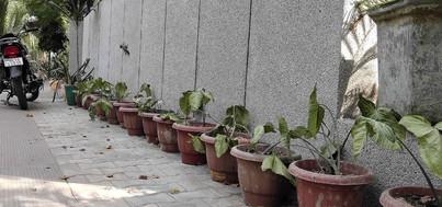 mission green pots36.jpg
