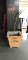 mission green pots.jpg