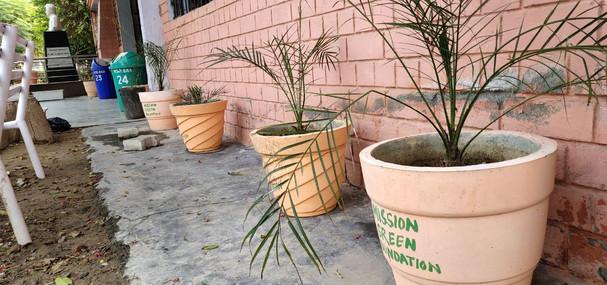 mission green pots45.jpg