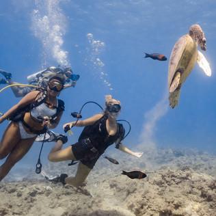 Oahu Scuba