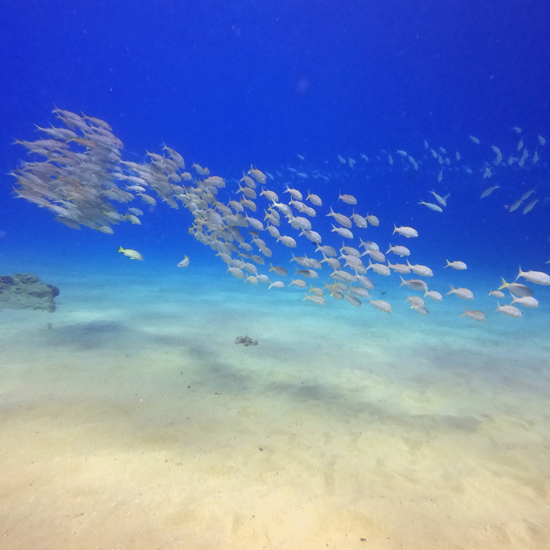 Hawaii School of Fish
