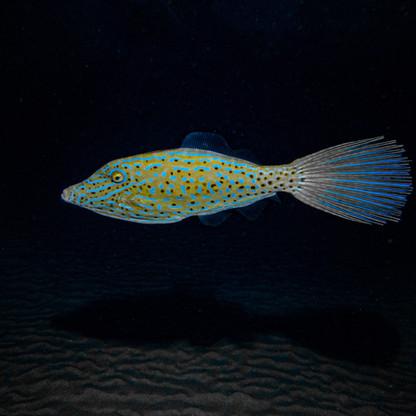 Glowing Fish.jpg