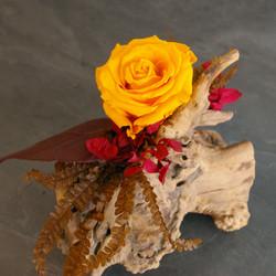 Cep de vigne rose jaune 5