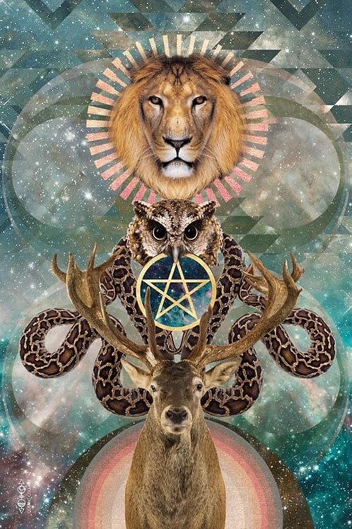 Animal Oracle Reading