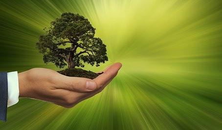 Peat Free Gardening (7)