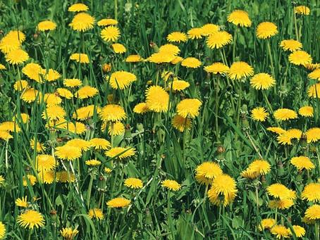 Organic Gardening - Avoid Harmful Chemicals