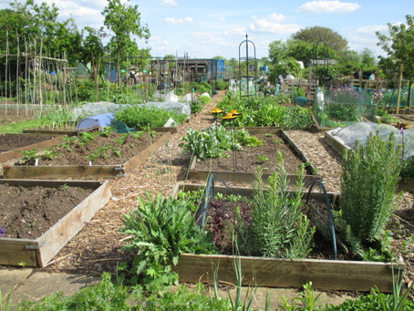 Thinking about getting an allotment?