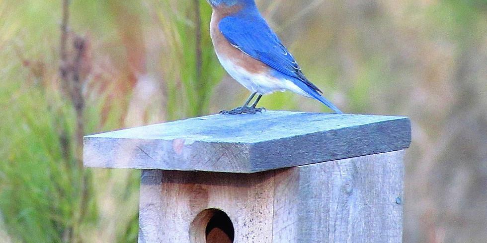 Nest Watching: A Virtual Naturalist Chat
