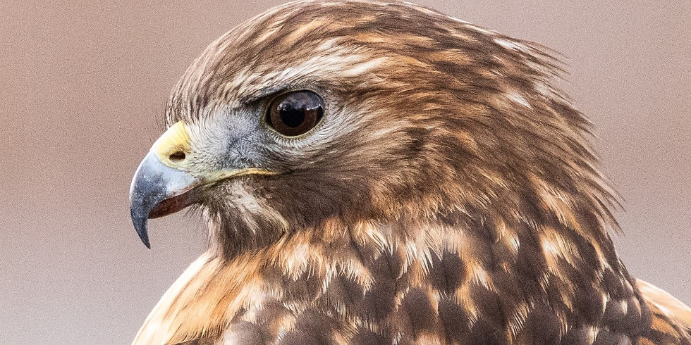 A Bird's Eye View of Our Planet: A Virtual Naturalist Chat