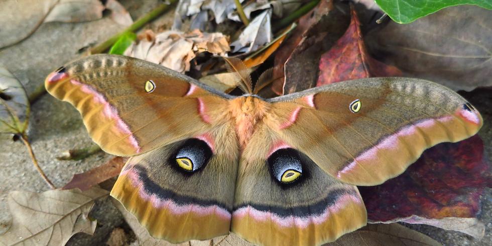 CANCELED Ijams Family Moth Night (Family Program)