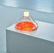 The bacteria lamp-1.png
