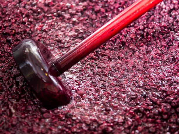 Pinot Noir Maische
