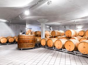 Barriques-Keller im Weingut Donatsch