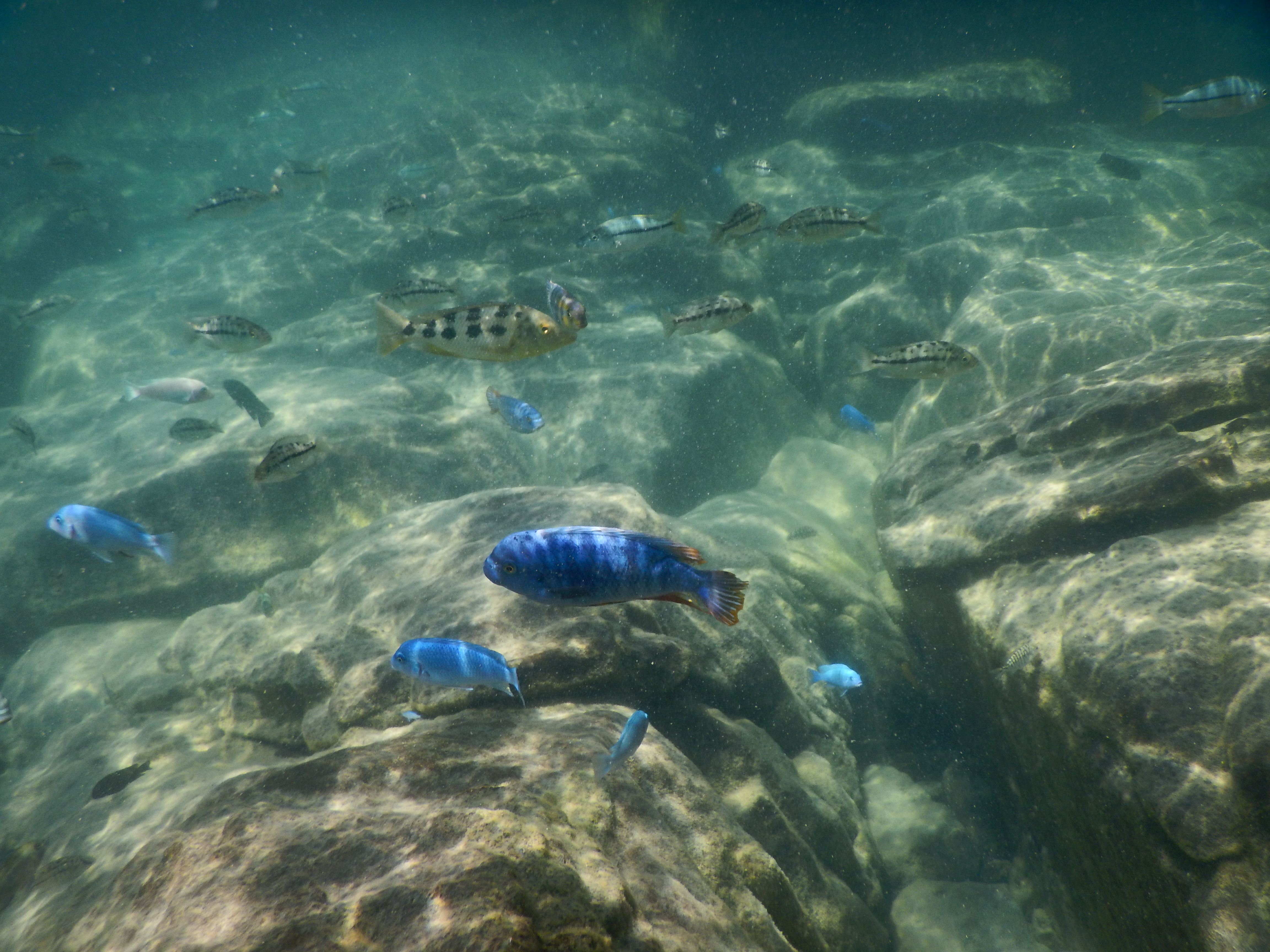 Boat trip and snorkeling - 6h00